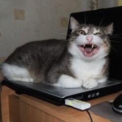 Digital cat art with Felix Ball - Pyragraph