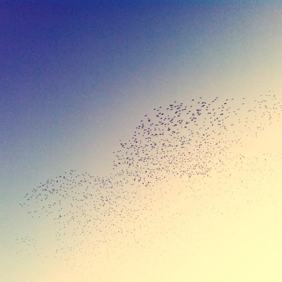 Starling murmuration by Christina Kennedy - Pyragraph