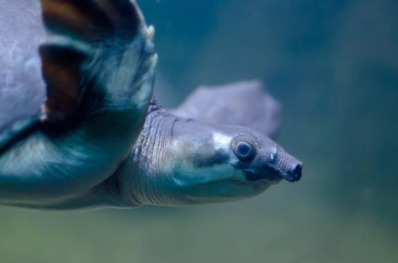 Sea Turtle - Chris Marxen - Pyragraph