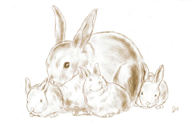 Bunny Family - Jed Alexander - Pyragraph