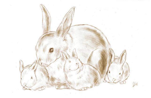 Bunny Family - Jed Alexander - Pyragraph