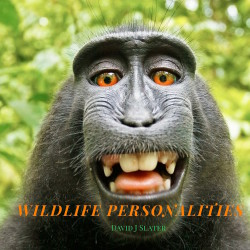 Wildlife Personalities by David Slater - Pyragraph