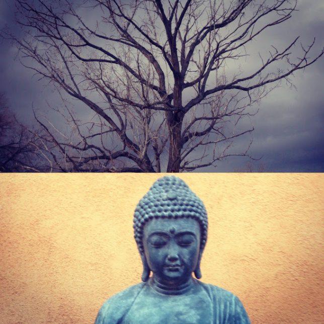 Buddha Under Ocotillo Tree. Photo by Danila Rumold - Pyragraph
