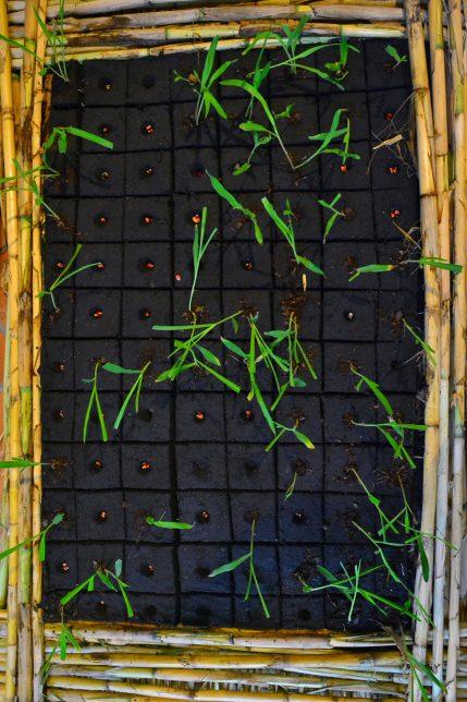 Decolonizing Nature Carlos Maravilla Santos_Semilla y sembrador - Pyragraph